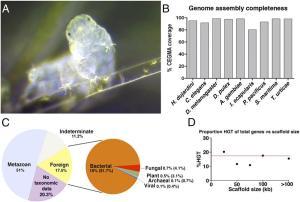 A. Imagen de un tardígrado. B. Porcentaje de cobertura de genes eucarióticos base de Hypsibius dujardini y otros organismos modelo. C. Fuente de genes en el genoma de H. dujardini. D. Proporción de genes de THG vs número total de genes por tamaño de andamio. Tomado de Boothby et al., 2015.